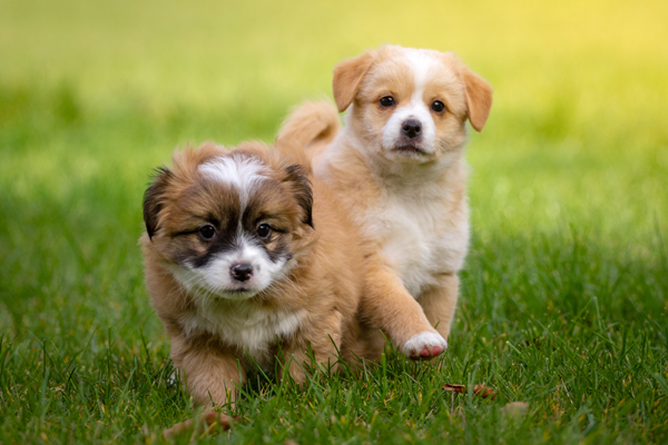 Puppy Care - Family Veterinary Clinic - Crofton & Gambrills MD