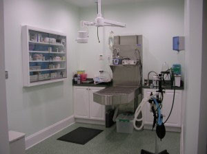 Dental Suite - Family Veterinary Clinic - Crofton & Gambrills, MD