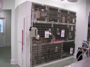 Heated Recovery - Family Veterinary Clinic - Crofton & Gambrills, MD