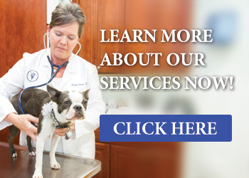 Services - Family Veterinary Clinic - Crofton & Gambrills, MD